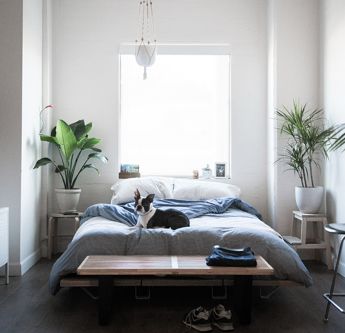 puppy on a bed with a fascia style roller shade
